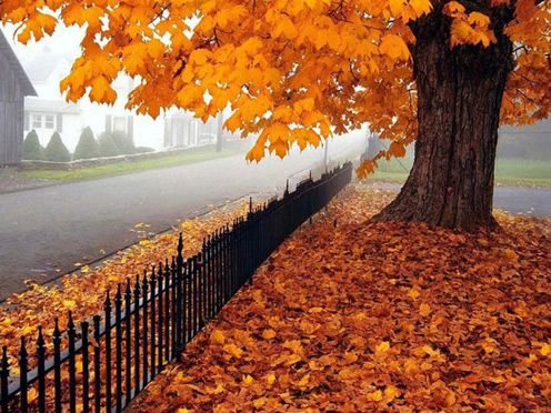 autumn-poetry-fall-october1.jpg